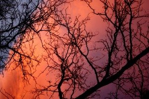 Orange Sunset Clouds Behind Winter Tree Branches - Free High Resolution Photo