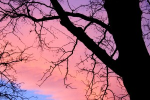 Pink Sunset Clouds Behind Leafless Tree - Free High Resolution Photo