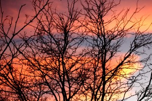 Sunset and Winter Trees - Free High Resolution Photo