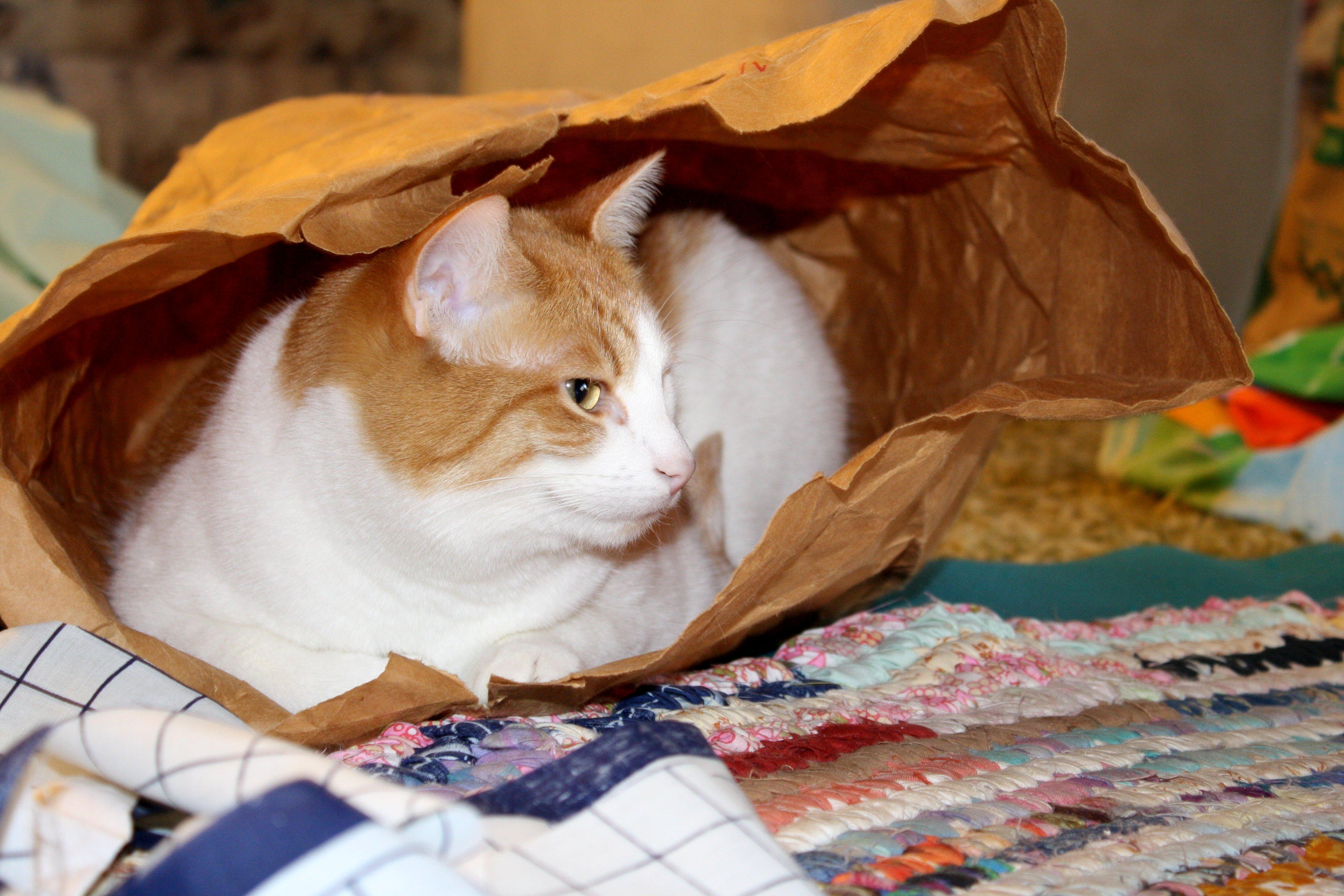 Cat In Paper Bag Picture Free Photograph Photos Public