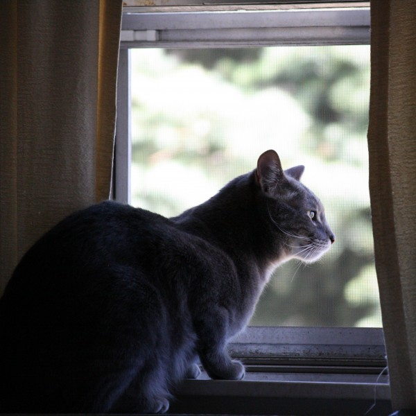 Cat Looking Out Window - Free High Resolution Photo