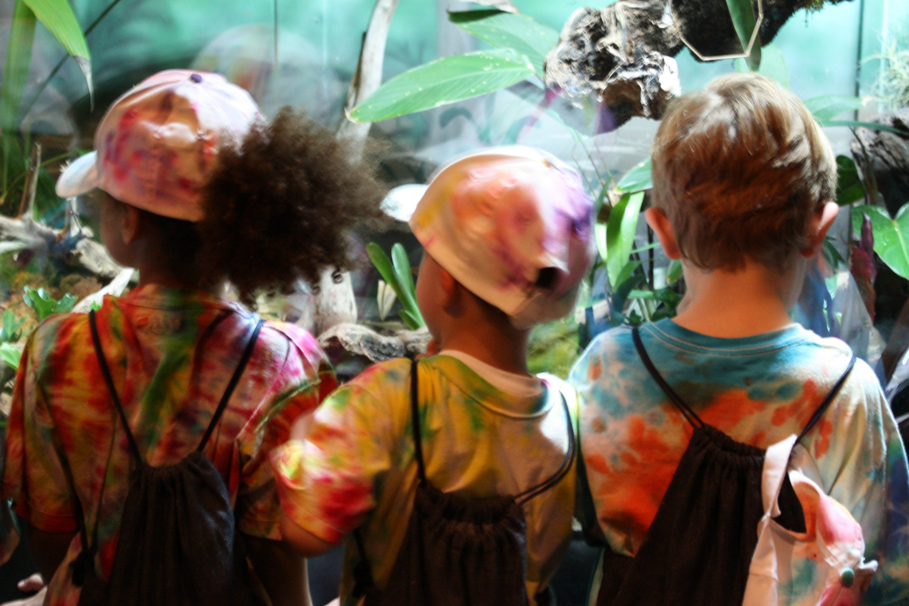 Children Looking At Zoo Exhibit Picture Free Photograph