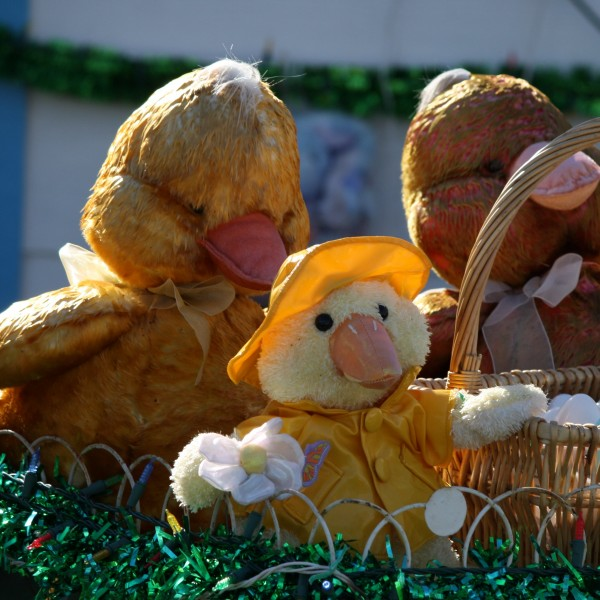 Easter Decorations - Chick in Raincoat - Free High Resolution Photo