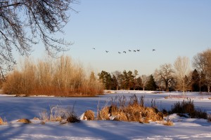 Geese Flying over Frozen Lake - Free High Resolution Photo