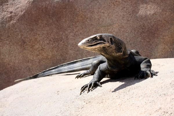 Lizard Sculpture - Free High Resolution Photo