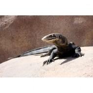 lizard-sculpture-thumbnail