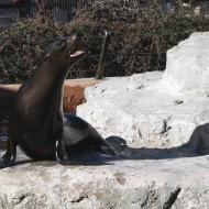 Sea Lion - Free high resolution photo