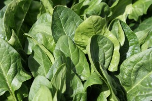 Spinach - free high resolution photo