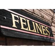 felines-sign-thumbnail