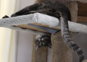 Funny Cat Hanging Upside Down on Kitty Tree - Free High Resolution Photo