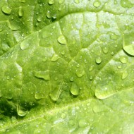 Leaf with Water Droplets Texture - Free High Resolution Photo