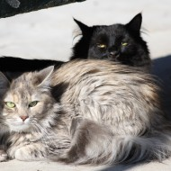 Long Haired Cats at the Park - Free High Resolution Photo