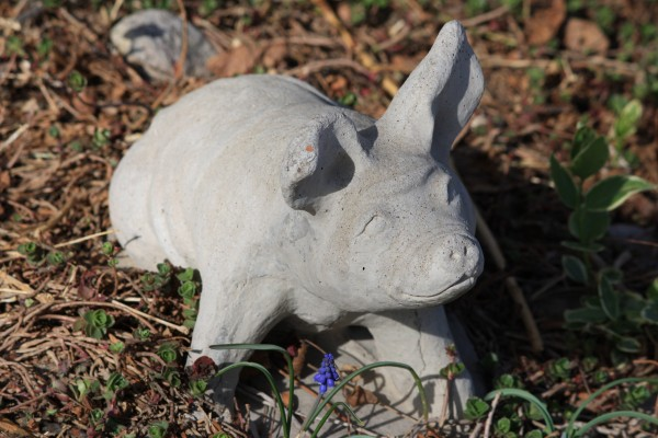 Pig Garden Figurine made of Cement - Free High Resolution Photo