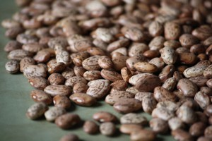 Pinto Beans - Free High Resolution Photo