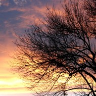 Sunset Clouds and Leafless Tree - Free High Resolution Photo