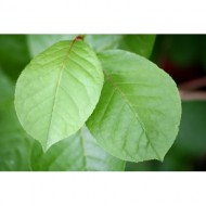 two-green-leaves-thumbnail