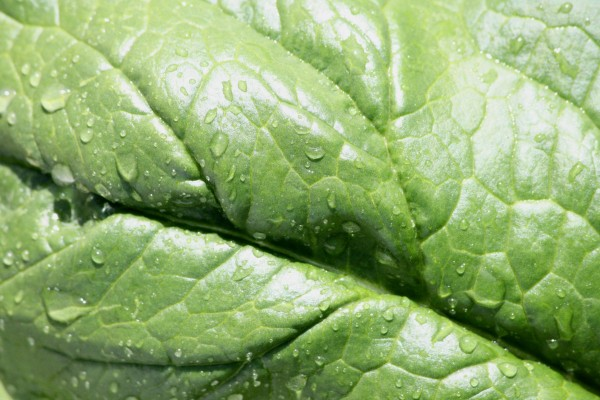 Water Drops on Leaf Texture - Free High Resolution Photo