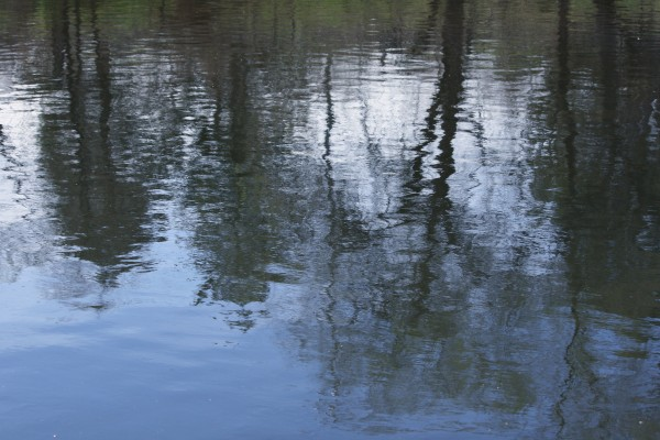 Water Reflecting Spring Trees - Free High Resolution Photo
