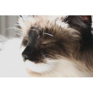 cat-with-eyes-closed-basking-in-sunbeam-close-up-thumbnail