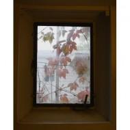 autumn-leaves-through-basement-window-thumbnail