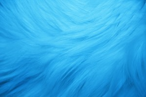 Light Blue Fur Texture - Free High Resolution Photo