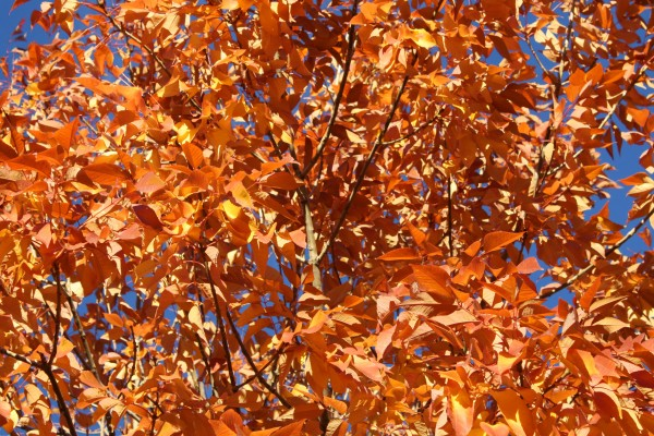 Orange Autumn Leaves - Free High Resolution Photo