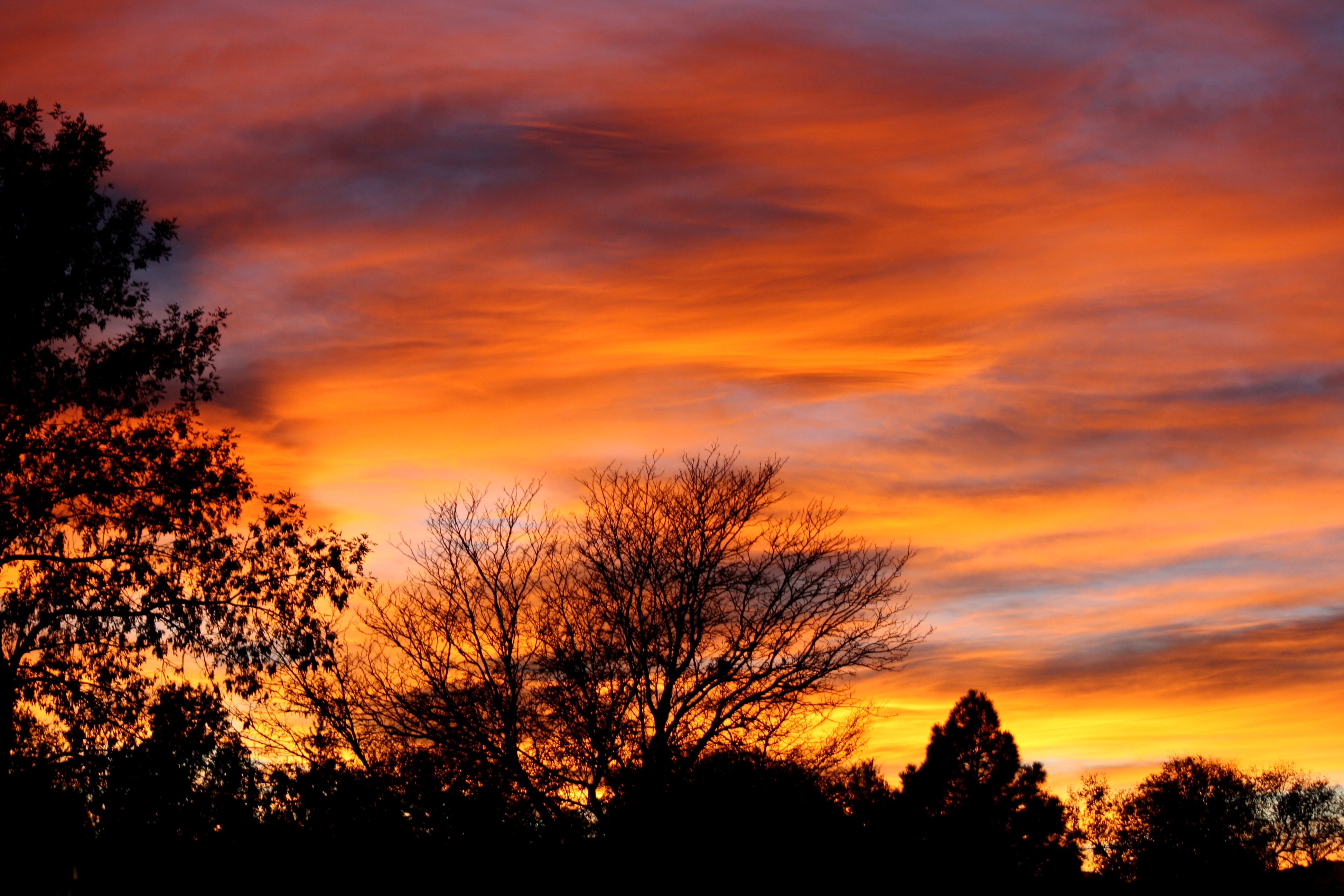 Orange Sunset with Trees Picture | Free Photograph | Photos Public ...