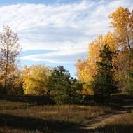 Path through Fall Meadow - Free High Resolution Photo