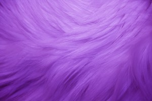 Purple Fur Texture - Free High Resolution Photo