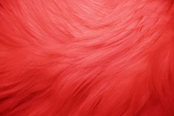 Red Fur Texture - Free  High Resolution Photo