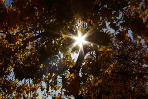 Sun Through Autumn Leaves - Free High Resolution Photo