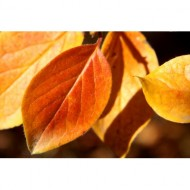 autumn-leaves-close-up-thumbnail