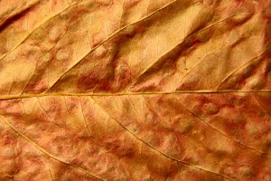 Dried Fall Leaf Close Up Texture - Free High Resolution Photo