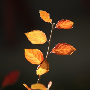 Fall Leaves in the Sun Close Up - Free High Resolution Photo
