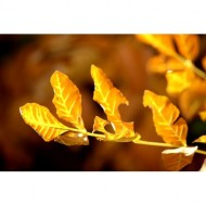 sprig-of-brown-and-yellow-autumn-leaves-thumbnail