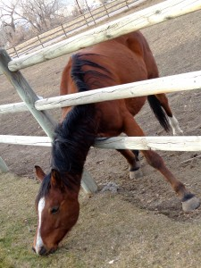 Horse Trying to Reach Grass Through Fence - Free High Resolution Photo