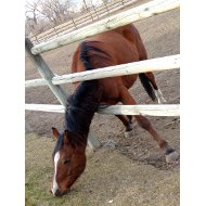 horse-trying-to-reach-grass-through-fence-thumbnail