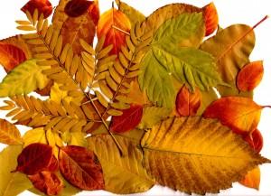 Autumn Leaves Collage - Free High Resolution Photo