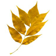 golden-autumn-leaves-thumbnail