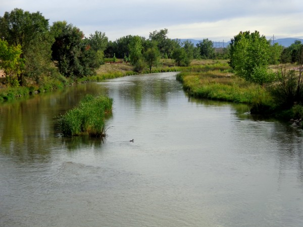 River with Duck Swimming - Free High Resolution Photo