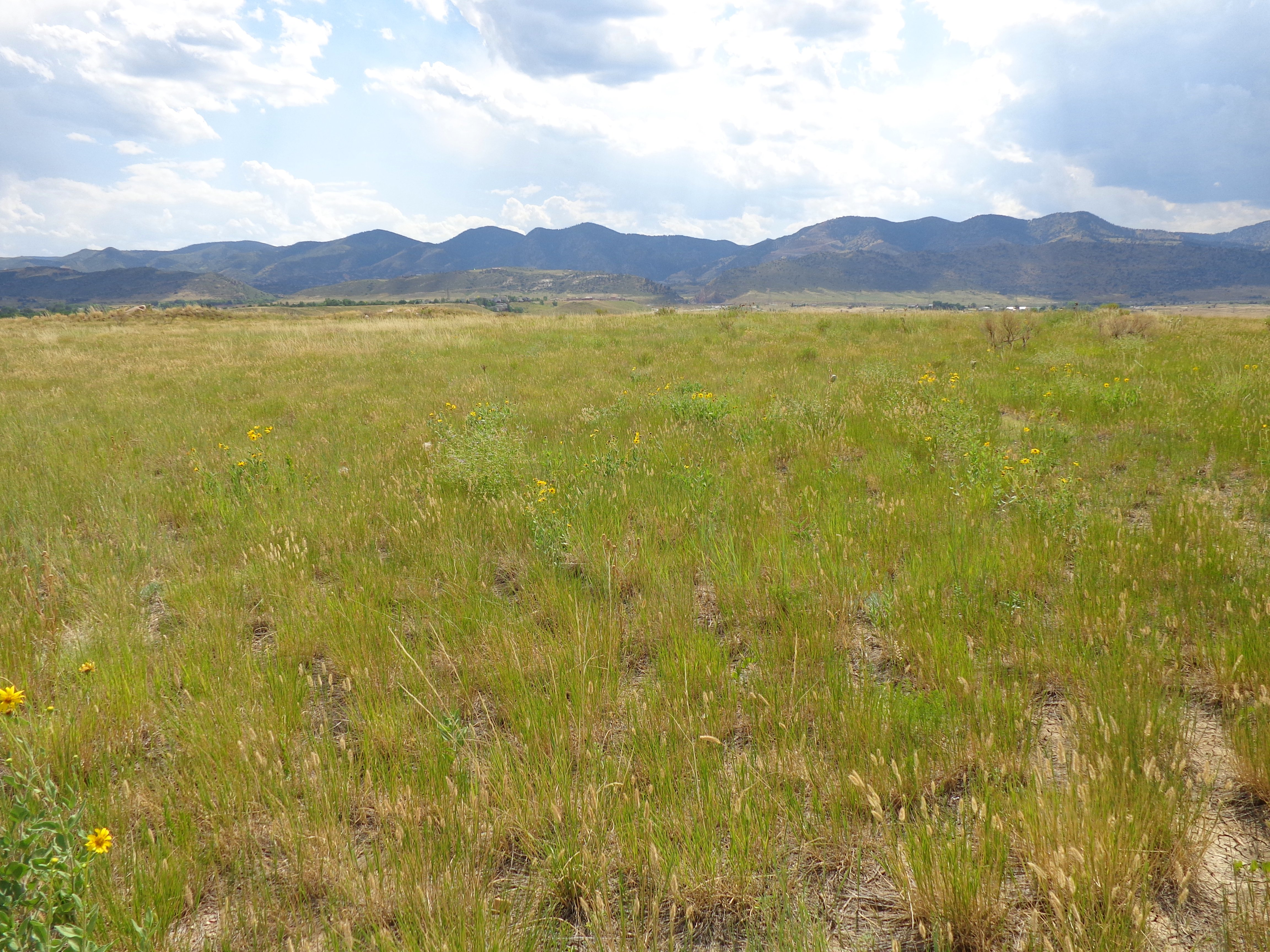 Prairie With Mountains In The Distance Picture Free