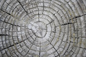 Tree Rings on Weathered Stump Texture - Free High Resolution Photo
