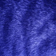Blue Tabby Fur Texture - Free High Resolution Photo