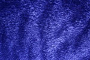 Blue Tabby Fur Texture - Free High Resolution Photo