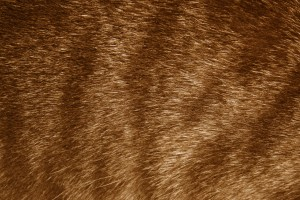 Brown Tabby Fur Texture - Free High Resolution Photo