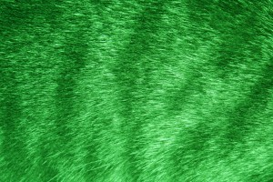 Green Tabby Fur Texture - Free High Resolution Photo