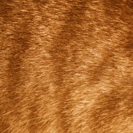 Orange Tabby Fur Texture - Free High Resolution Photo