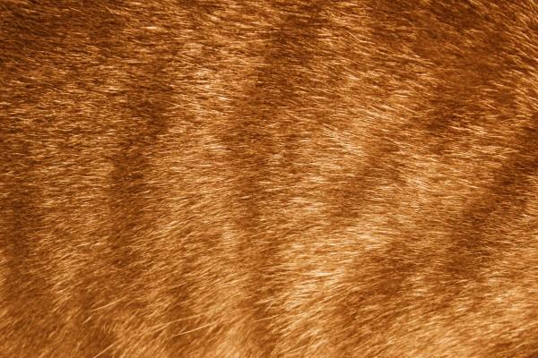 Orange Tabby Fur Texture - Free High Resolution Photo
