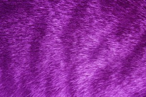 Purple Tabby Fur Texture - Free High Resolution Photo