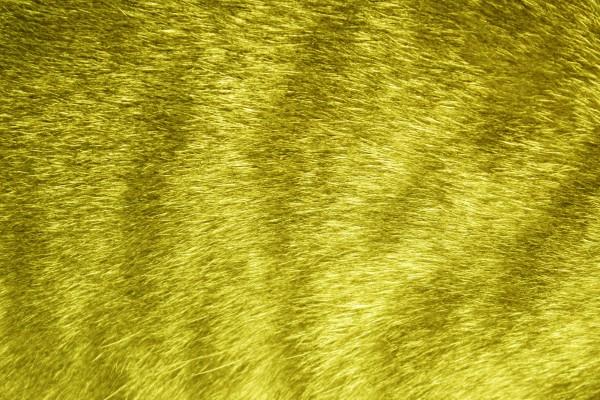 Yellow Tabby Fur Texture - Free High Resolution Photo